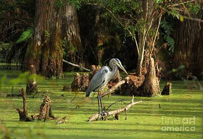 Young Blue Heron Print by Theresa Willingham