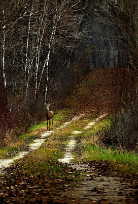 Young Buck And Autumn Print by Thomas Young