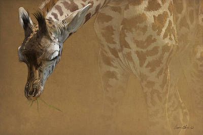 Mammals Digital Art - Young Giraffe by Aaron Blaise