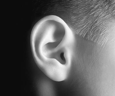 Young Persons Ear In Black And White Print by Don Hammond