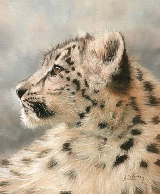 Young Snow Leopard Print by David Stribbling