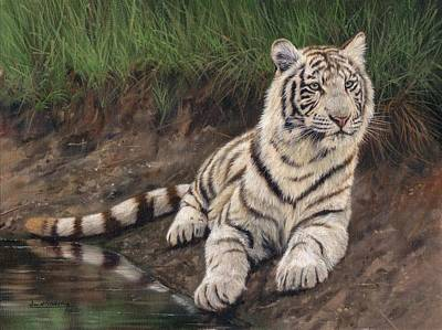 Bengal Tiger Painting - Young White Tiger by David Stribbling