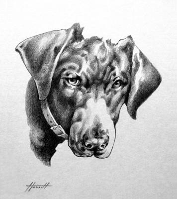 Portrait Drawing - You're Kidding by Patricia Howitt