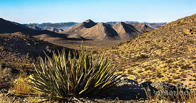 Yucca In High Deaert Print by Robert Bales