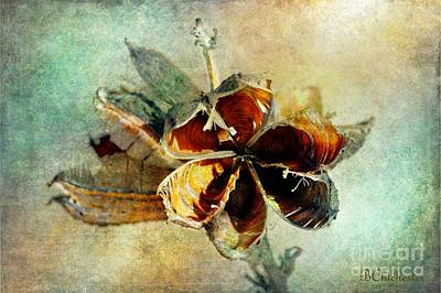 Las Cruces Digital Art - Yucca Pod - Barbara Chichester by Barbara Chichester