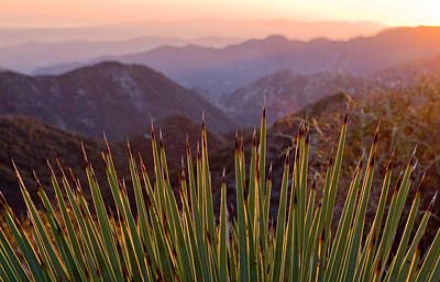 Yucca Spikes Print by Adam Pender