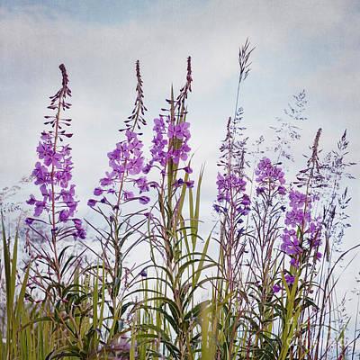 State Flowers Photograph - Yukon State Flower by Priska Wettstein