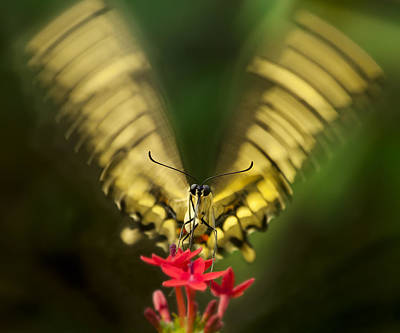 Butterfly In Motion Photograph - Yum by Jennifer