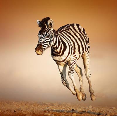 Calf Photograph - Zebra Calf Running by Johan Swanepoel