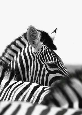 Black_white Photograph - Zebra Eye by Russell Millner