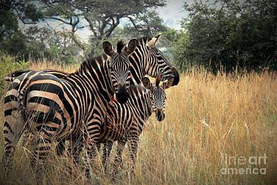 African Landscape Photograph - Zebra Family by David Gardener