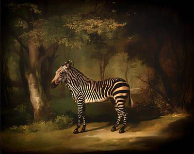 Zebra Painting - Zebra by Mountain Dreams