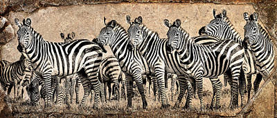 Zebra Herd Rock Texture Blend Print by Mike Gaudaur