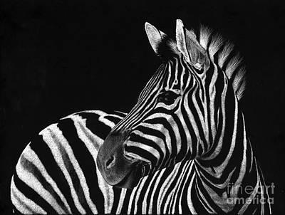 Scratchboard Drawing - Zebra No. 3 by Sheryl Unwin