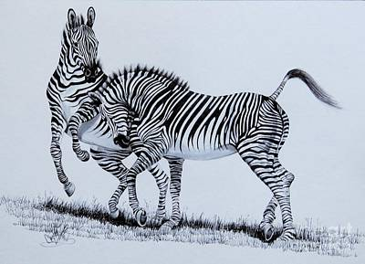 Ink Drawing Drawing - Zebra Play by Cheryl Poland