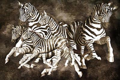 Zebras Print by Betsy C Knapp