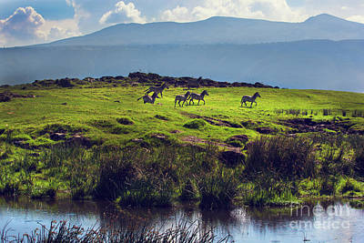 Green Photograph - Zebras On Green Grassy Hill. Ngorongoro. Tanzania by Michal Bednarek