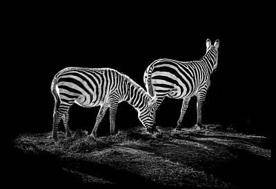 Zebra's  Print by Paul Neville