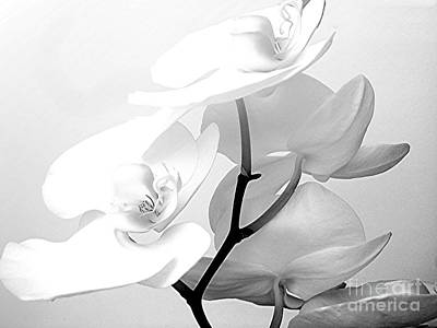 Maureen Photograph - Zen by Maureen J Haldeman