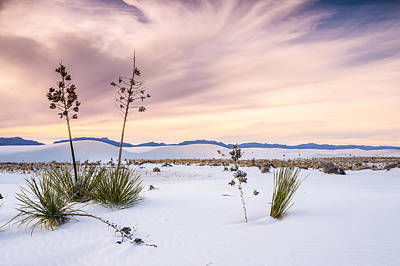 Dream Photograph - Zen Of Yuccas In White Sands by Ellie Teramoto