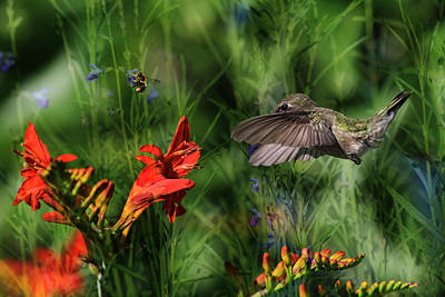 Crocosmia Photograph - Zip-a-dee-doo-dah by Donna Kennedy