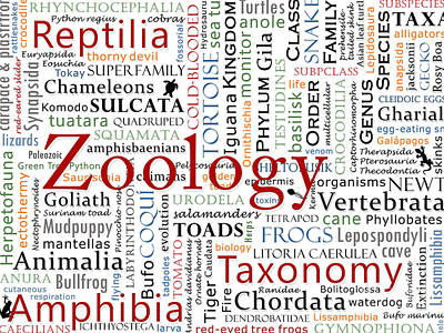 Salamanders Digital Art - Zoology 2 - Herpetology In Typography by Nola Lee Kelsey