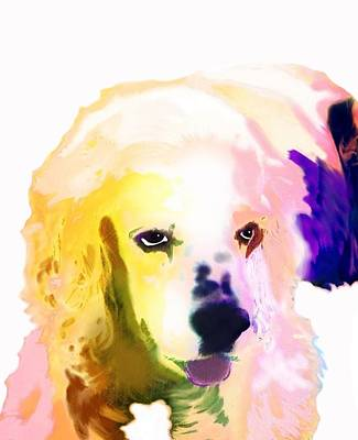 Pup Digital Art - Zorro by Cindy Edwards