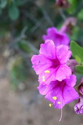 Prescott Photograph -  Arizona Wildflower by Sharon Mick