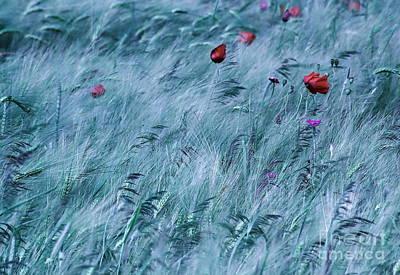 Field Print by Odon Czintos