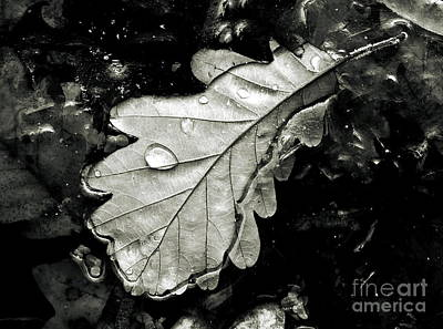 Sweating Photograph -  Leaf by Odon Czintos