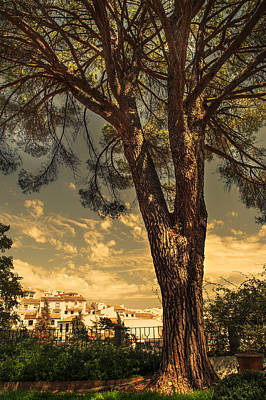 Pine Tree In The Secret Garden Print by Jenny Rainbow