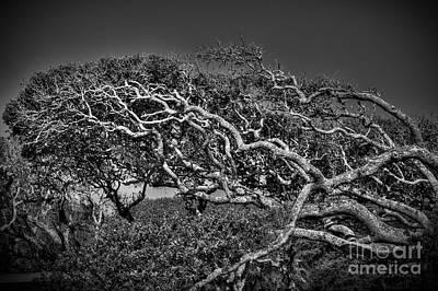 Trees Please Print by Richard Burr