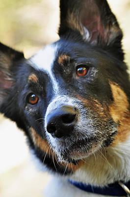 Dogs Photograph - Anyz Four by Danielle Del Prado