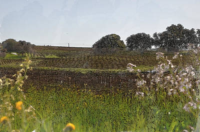 Beautiful California Vineyard Framed With Flowers Print by Brandon Bourdages