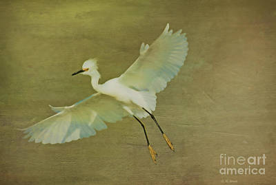 Egret Mixed Media - Beauty Of Flight by Deborah Benoit