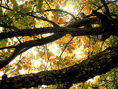 Beneath The Autumn Wolf River Apple Tree Print by Angie Rea