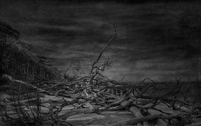 Big Talbot Island Print by Mario Celzner