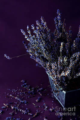 Dried Photograph - Bouquet Of Lavender by HD Connelly