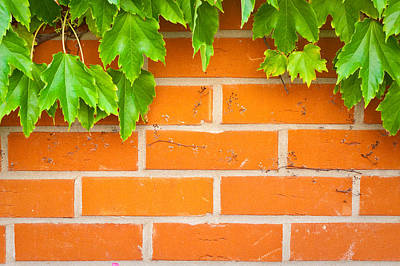 Vines Photograph - Brick Wall by Tom Gowanlock