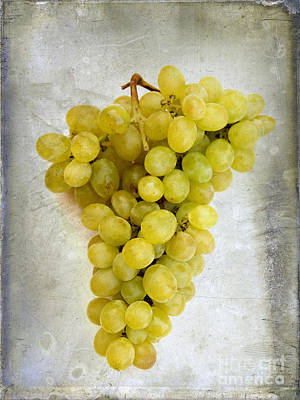 White Grape Photograph - Bunch Of Grapes by Bernard Jaubert