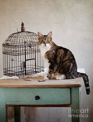Cat And Bird Print by Nailia Schwarz