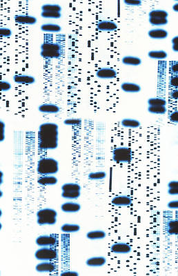 Computer Artwork Of Dna Autoradiogram Sequences Print by Pasieka