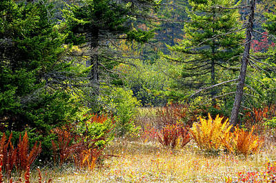 Cranberry Glades Botanical Area Print by Thomas R Fletcher