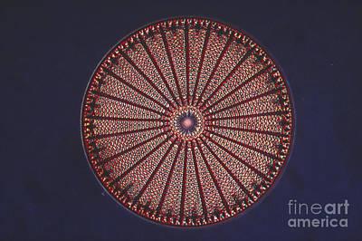 Diatom Print by Eric V. Grave