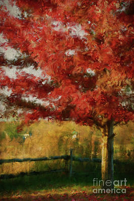 Vivid Fall Colors Photograph -  Maple Tree In Full Color/digital Painting  by Sandra Cunningham