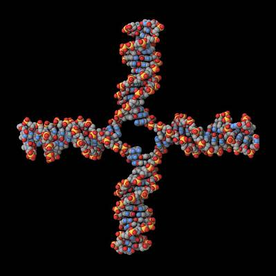 Dna Recombination, Molecular Model Print by Laguna Design