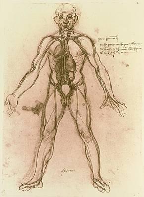 Drawing Of Human Venous System (leonardo Da Vinci) Print by Mehau Kulyk