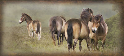 Horse Photograph - Exmoor Ponies by Ethiriel  Photography