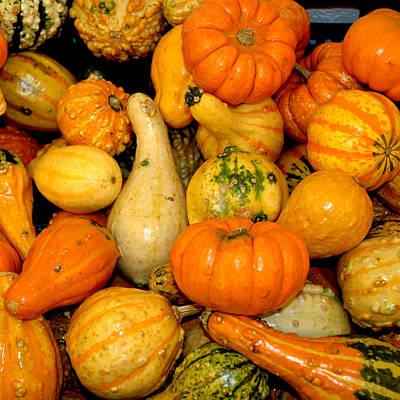 Orange Photograph - Fall Gourds by LeeAnn McLaneGoetz McLaneGoetzStudioLLCcom