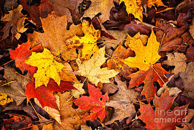 Fall Leaves Background Print by Elena Elisseeva